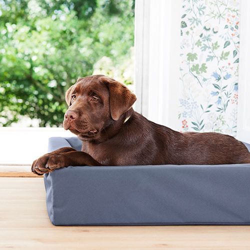 Bia bed Outdoor hundeseng - hund som ligger i Bia bed
